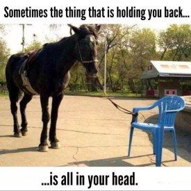 horsechair