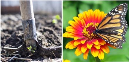 plantingflower2